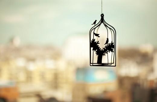 jaula-pájaros-1024x640
